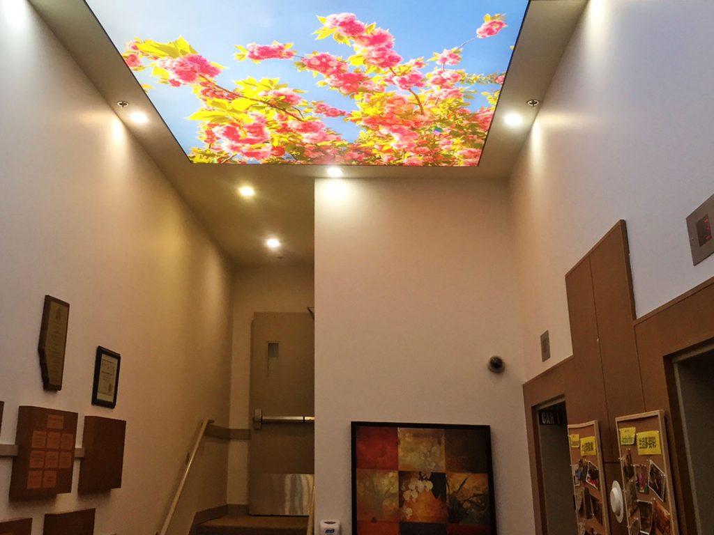 Calgary backlit printed ceiling and potlights