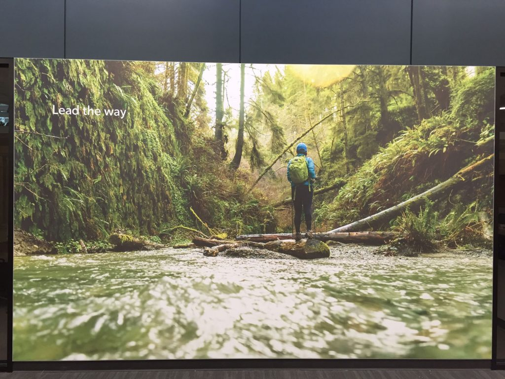 printed forest custom wall cover